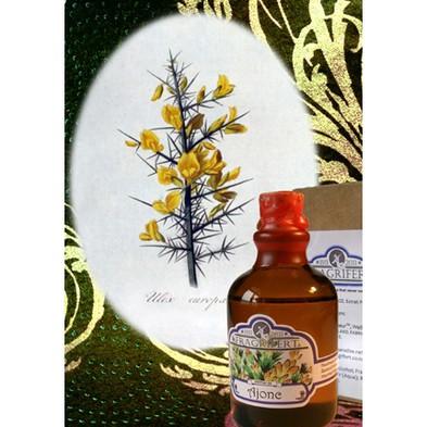 Fragrifert Parfumeur Ajonc аромат