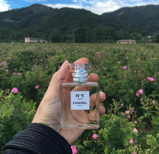 Новый аромат на фоне розовых полей