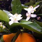 Нота Апельсиновый цвет