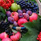 Нота Цветочно-фруктовый аккорд