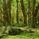 Нота Дождевой лес