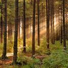 Нота Лесные деревья
