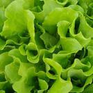 Нота Листья салата