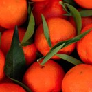 Нота Сицилийский мандарин