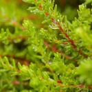 Нота Мокрый мох
