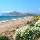 Нота Пляжные цветы