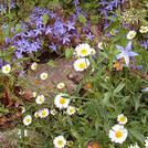 Нота Полевые цветы