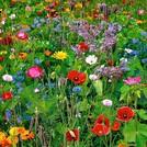 Нота Садовые цветы