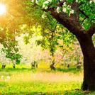 Нота Солнечно-древесный аккорд
