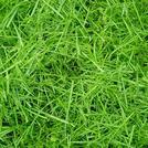 Нота Свежескошенная трава