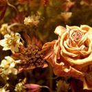 Нота Высушенные цветы