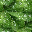 Нота Зеленый аккорд