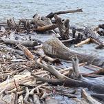 Нота Дрейфующая древесина