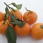 Нота Горький апельсин