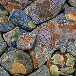 Нота Лишайники на камнях
