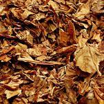 Нота Листья табака