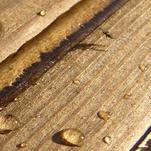 Нота Влажная древесина