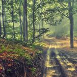 Нота Запах леса