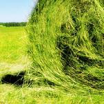 Нота Зеленое сено